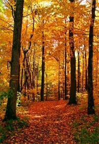 forest-path imageadjust